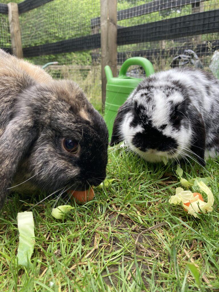Daisy and Martha the bunnies emjoying their breakfast