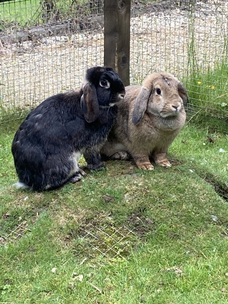 Dave and Maggie the rabbits