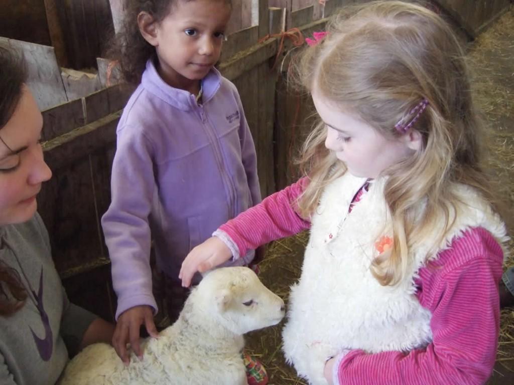 Lambing at Elsham
