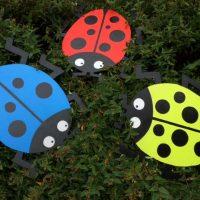 giant ladybirds